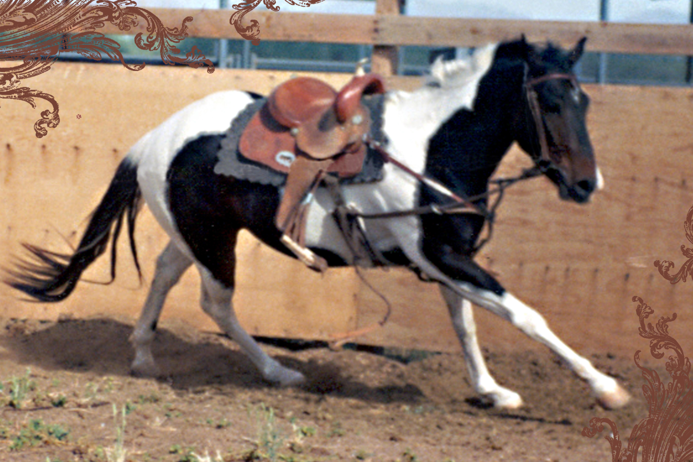 arizona, buckeye, burial, cow, horse, donkey, pony, cremation, dead, glendale, llama, peoria, phoenix, removal, rendering, scottsdale, surprise, new river, cave creek, carefree, scottsdale, livestock